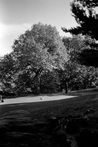 central-park-napper.jpg